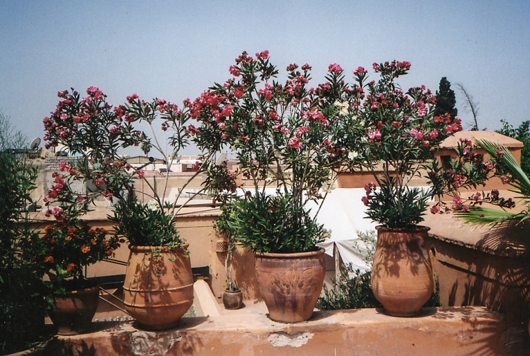 MARRAKECH_FILM_PHOTOGRAPHY-028